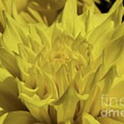 Yellow It Is Art Print