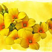 Yellow Kalanchoe - Succulent Sunshine Art Print