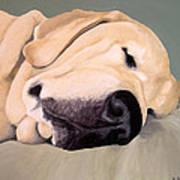 Yellow Lab - A Head Pillow Is Nice Art Print
