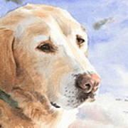 Yellow Lab In Snow Watercolor Portrait Art Print