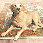 Yellow Lab On A Rug Watercolor Portrait Art Print