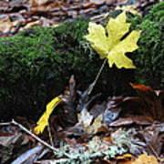 Yellow Leaf Art Print