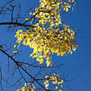 Yellow Leaves In Fall And Deep Blue Sky Art Print
