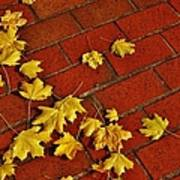 Yellow Leaves On Red Brick Art Print