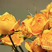 Yellow Mini Rose's Closeup Art Print