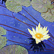 Yellow On Blue Art Print