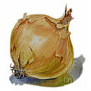 Yellow Onion Art Print