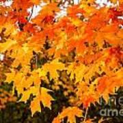 Yellow Orange Fall Tree Art Print