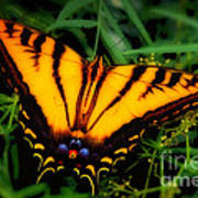 Yellow Orange Tiger Swallowtail Butterfly Art Print