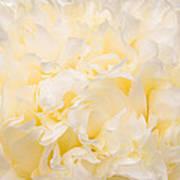 Yellow Peony Petals Art Print