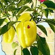 Yellow Pepper Art Print