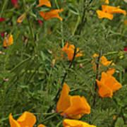 Yellow Poppies Dsc07460 Art Print