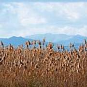 Yellow Reeds And Blue Mountains Art Print