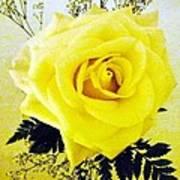 Yellow Rose 2 Art Print