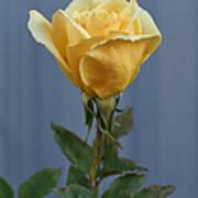 Yellow Rose Greeting Card Art Print