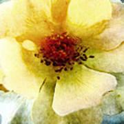 Yellow Rose Painted Art Print