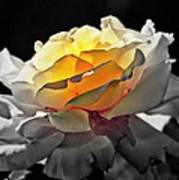 Yellow Rose Series - ...but Soul Is Alive Art Print