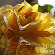 Yellow Rose Wet And Dry Art Print