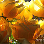 Yellow Roses And Light Art Print