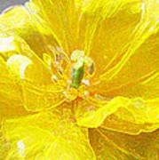 Yellow Tenderness Art Print