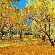 Yellow Trees Art Print