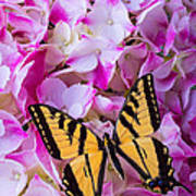 Yellow Wings Art Print