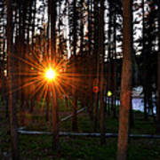 Yellowstone - Sunset Through The Trees Art Print