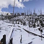 Yellowstone Winter Art Print by David Yack
