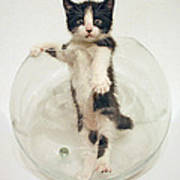 Yin Yang Kitten Art Print