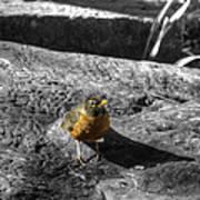 Young Bird Exploring Art Print