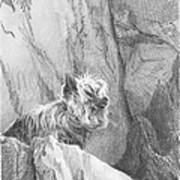 Yorkie Dog On A Cliff Pencil Portrait Art Print