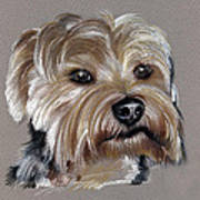 Yorkshire Terrier- Drawing Art Print