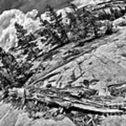 Yosemite Fallen Tree Art Print