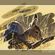 Yosemite Np Wildlife - Doe Art Print