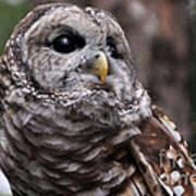 You Can Call Me Owl Art Print