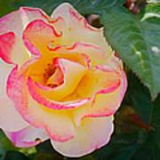 You Love The Roses - So Do I Art Print