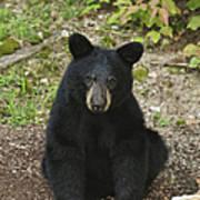 Young Bear 1 Art Print