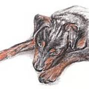 Young Black Dog Portrait Art Print