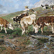 Young Cattle In Tyrol Art Print