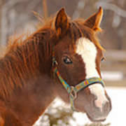 Young Horse In Winter Day Art Print