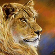 Young Lion Art Print