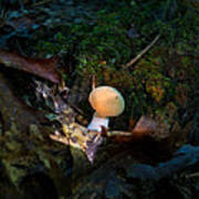 Young Lonely Mushroom 2 Art Print