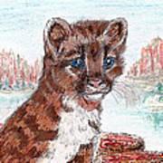 Young Mountain Lion Art Print
