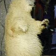 Young Polar Bear And Boy  Art Print