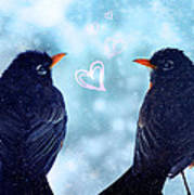 Young Robins In Love Art Print