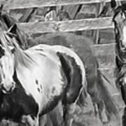 Young Stallions Art Print