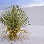Yucca At White Sands Art Print