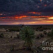 Yucca Sunset Art Print