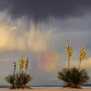 Yuccas, Rainbow And Virga Art Print
