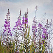 Yukon State Flower Art Print